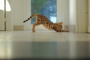 Curiosity killed the cat, so they say